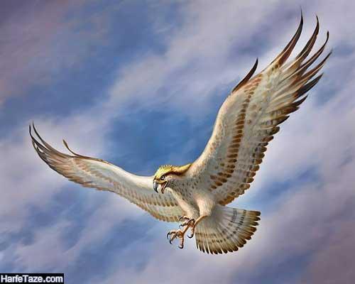 والپیپر عقاب در حال پرواز با کیفیت برای گوشی پسرانه