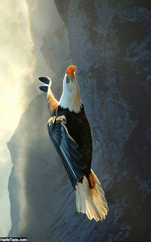 عقاب سیاه با بال های باز برای تصویر زمینه موبایل