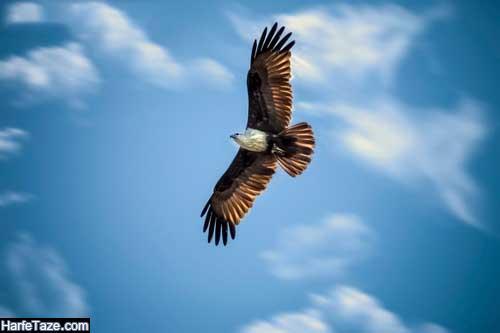 عقاب زیبا برای پس زمینه موبایل