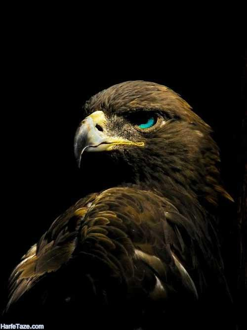 عکس خالکوبی عقاب