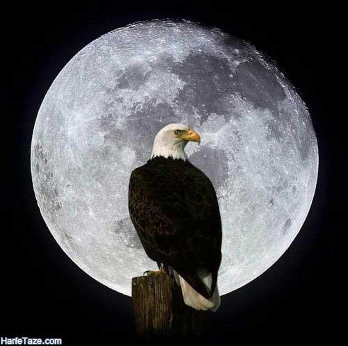 «والپیپر عقاب در ماه برای گوشی