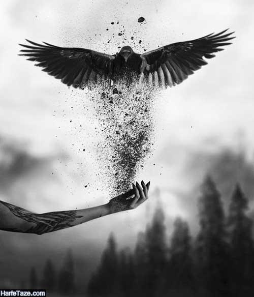 عکس فانتزی عقاب برای بک گراند گوشی