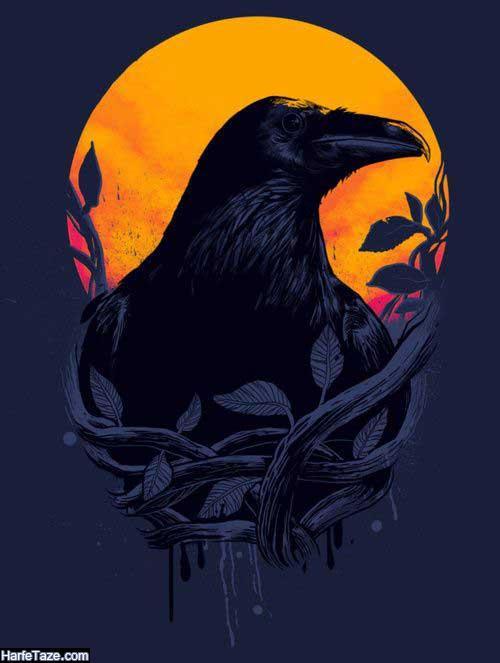 عکس عقاب زیبا
