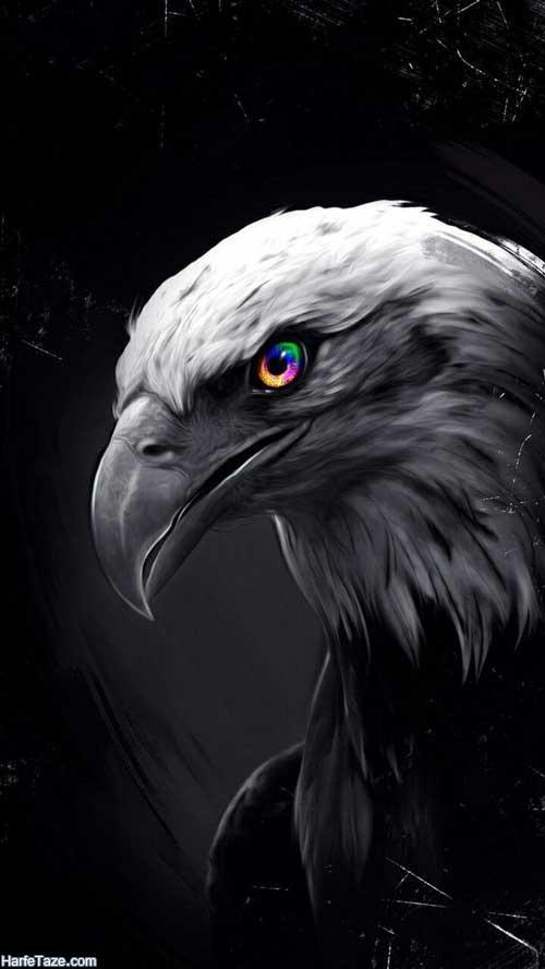 والپیپر عکس عقاب برای بک گراند و پس زمینه با کیفیت HD