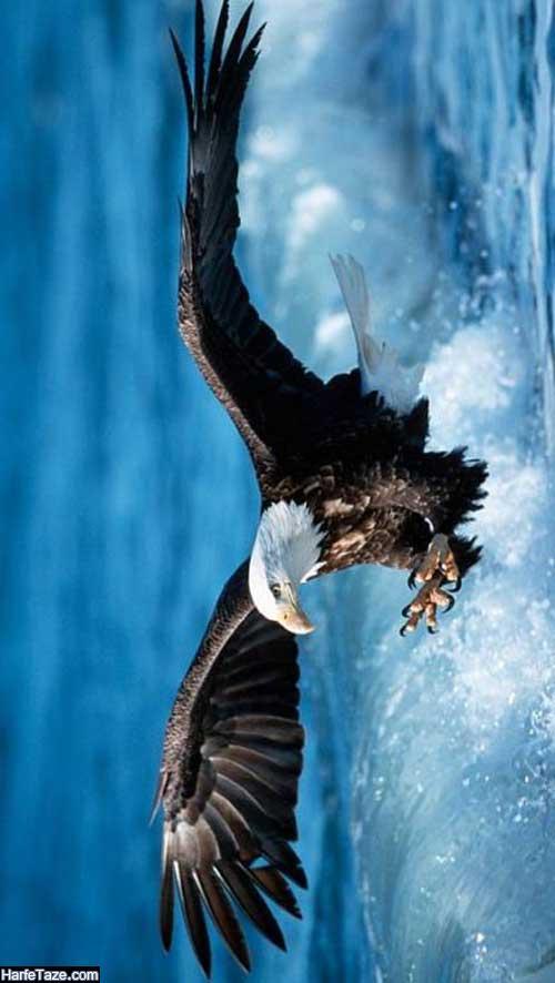 والپیپر عقاب در آسمان برای اندروید