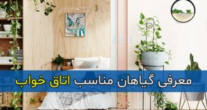 معرفی گل و گیاهان مناسب اتاق خواب
