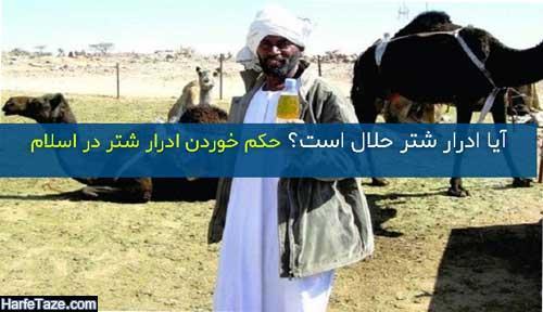 آیا ادرار شتر حلال است؟ + حکم خوردن ادرار شتر در اسلام چیست؟