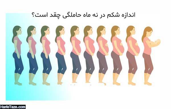 اندازه و بزرگی شکم در ماههای مختلف بارداری