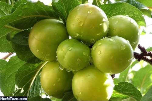 فواید و مضرات گوجه سبز برای زنان باردار