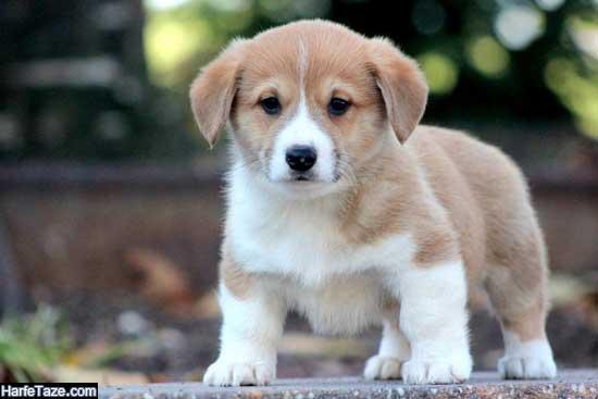 عکس توله سگ برای پس زمینه گوشی