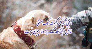 عکس سگ برای پروفایل دخترانه و پسرانه + عکس پروفایل سگ با متن
