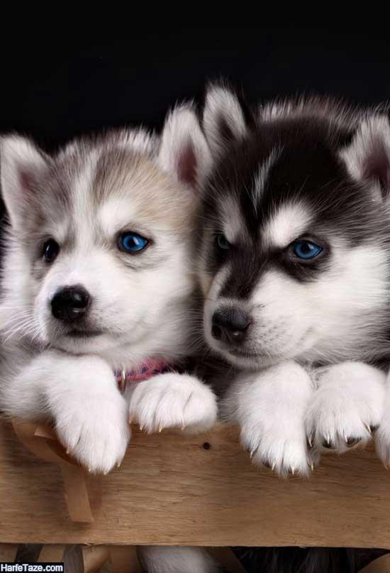تصاویر انواع سگهای اهلی و وحشی