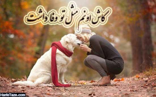 عکس سگ برای پروفایل پسرانه