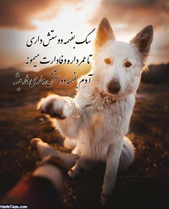 عکس سگ برای پروفایل دخترانه