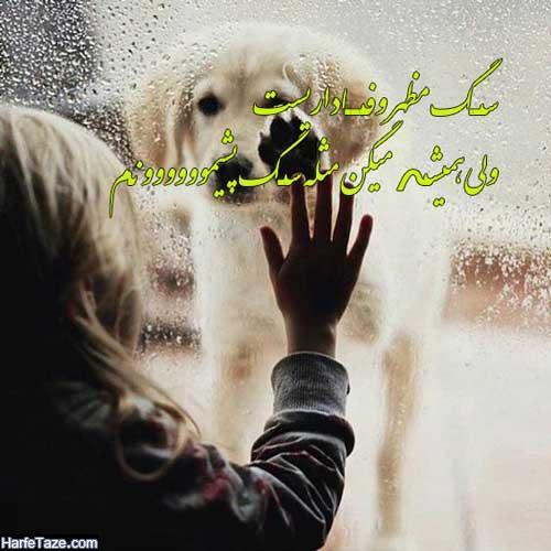 عکس نوشته سگ مظهر وفاداریه