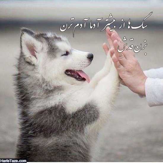 عکس سگ برای پروفایل دخترانه و پسرانه + عکس نوشته تیکه دار با عکس سگ