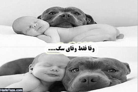 متن درباره وفای سگها