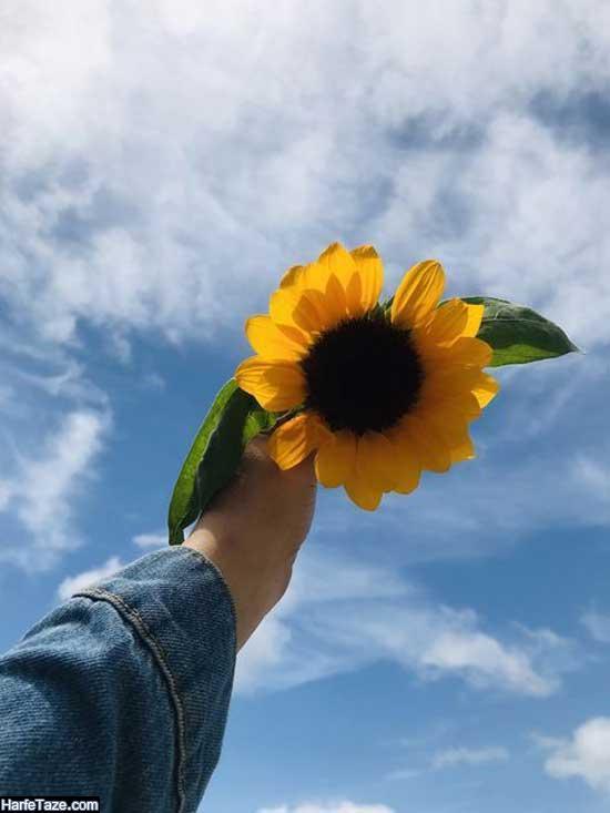 تصاویر دست دختر و گلهای آفتابگردان