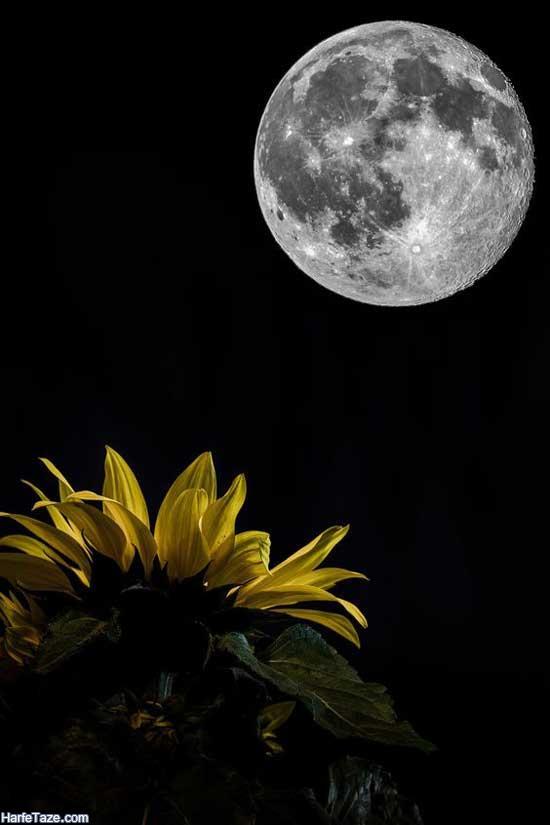 گلهای آفتابگردان قشنگ برای پروفایل و استوری