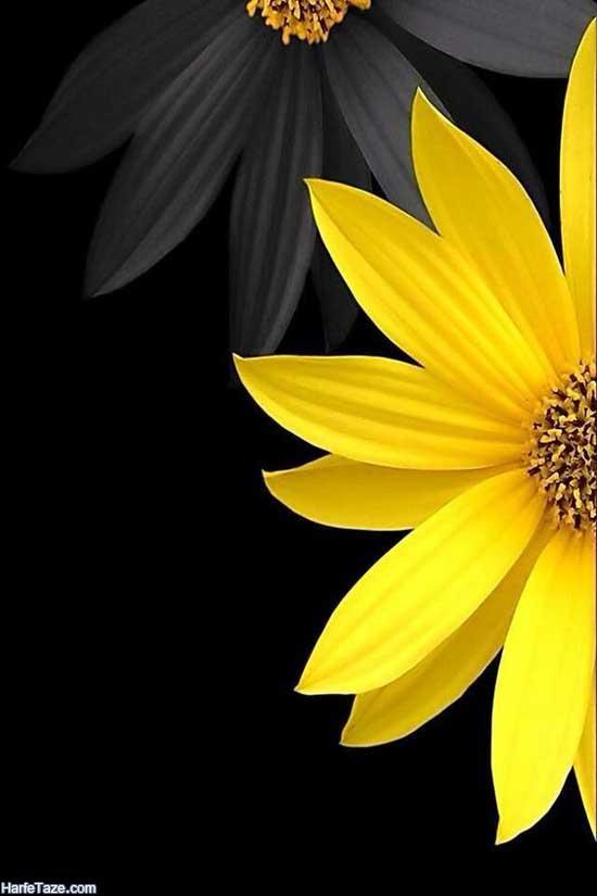 گلهای آفتابگردان با تم مکشکی برای عکس پروفایل