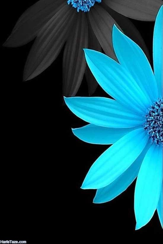 تصاویر گلهای آفتاب گردان رنگی