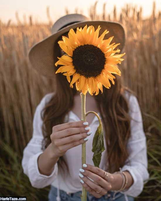تصویر زمینه گل آفتابگردان دخترونه زیبا