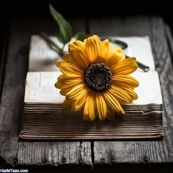 عکس پروفایل گل آفتابگردان و دختر
