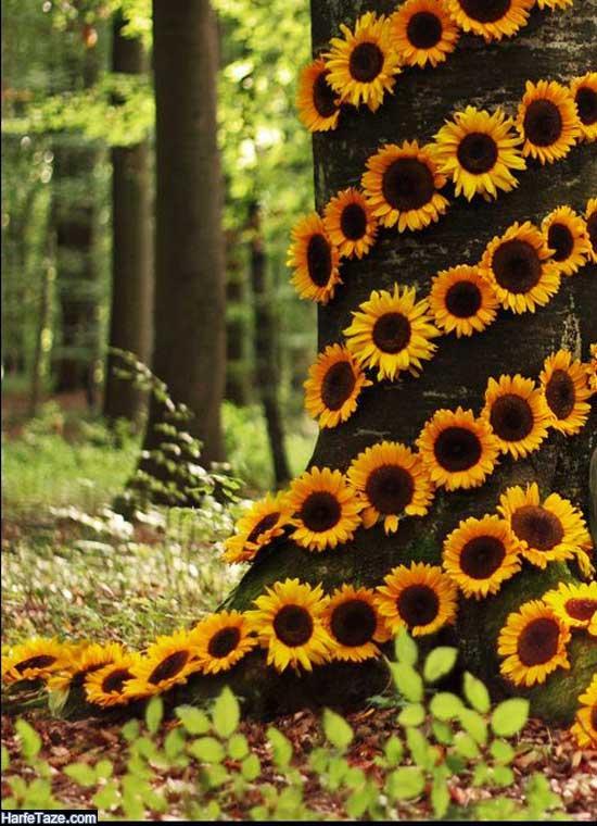 تصویر زمینه گل آفتابگردان با کیفیت HD برای گوشی