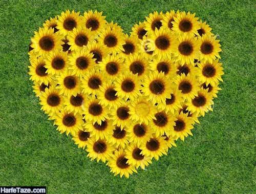 عکس گل آفتابگردان برای پس زمینه موبایل و عکس پروفایل با کیفیت بالا
