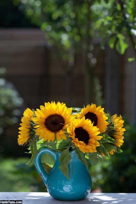گلدان گل آفتابگردان برای طراحی