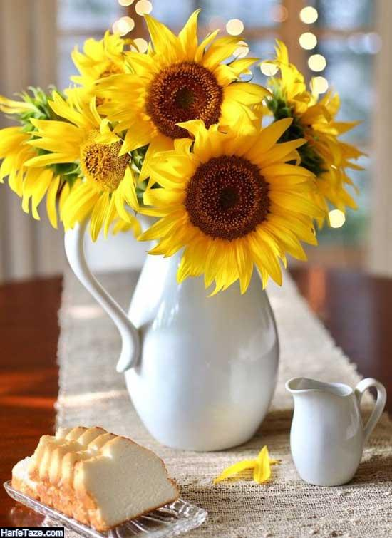 دانلود تصاویر گل آفتابگردان برای پروفایل
