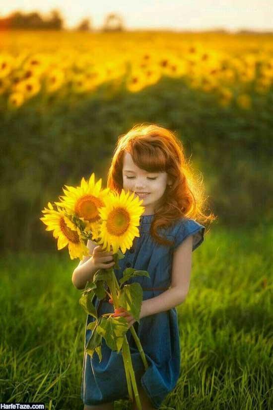 بک گراند و تم موبایل با گل آفتابگردان