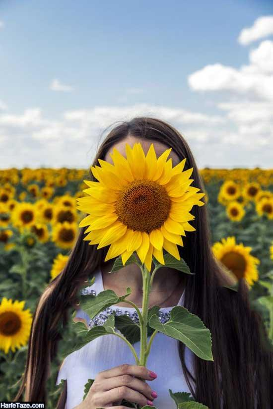 عکس پروفایل تک شاخه گلهای آفتاب گردان