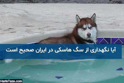 قیمت خرید و نحوه خرید سگهای هاسکی