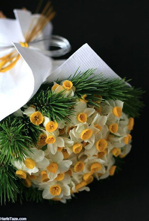 دانلود والپیپر و عکس های زیبا از انواع گل نرگس