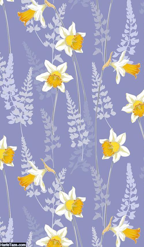 دانلود والپیپرهای گل نرگس با کیفیت بالای hd