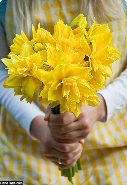 عکس گل نرجس با کیفیت اچ دی برای تم گوشی