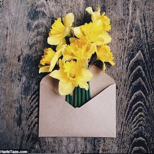 بکگراند گلهای نرجس با کیفیت بالا برای گوشی سامسونگ