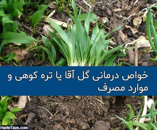 مضرات و نحوه مصرف گیاه گیلاخه یا گل آقا (والک، تره کوهی)