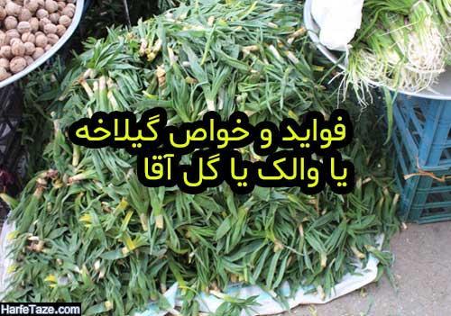 موارد مصرف و فواید گیاه گل آقا یا والک