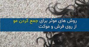 چند ترفند ساده و موثر برای جمع کردن مو از روی فرش و موکت
