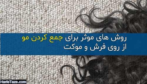 چند ترفند موثر برای جمع کردن مو از فرش و موکت + لوازم جمع کننده مو از فرش