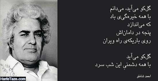 شاعران معاصر