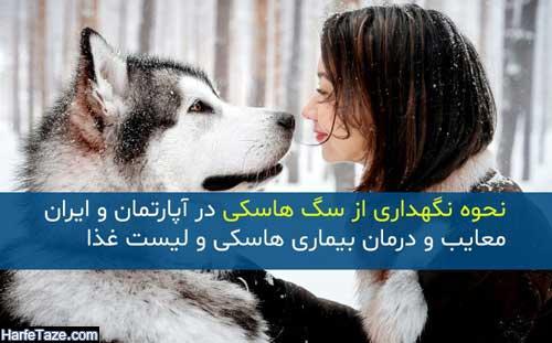 نحوه نگهداری از سگ هاسکی در ایران | معایب و درمان بیماری هاسکی