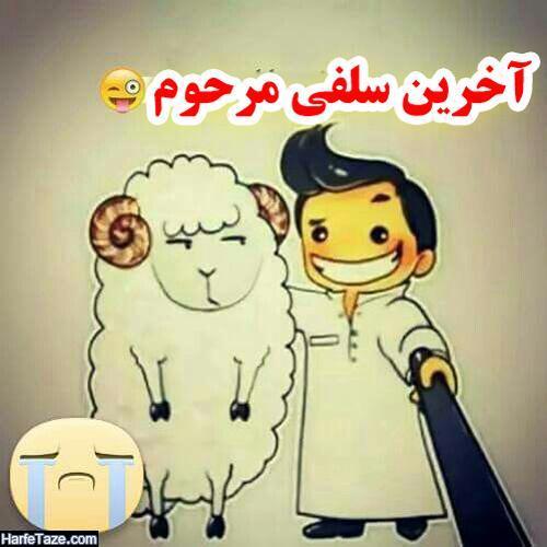 اس ام اس تبریک طنز عید قربان به خواهر و برادر