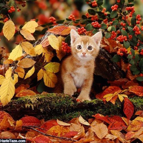 زیباترین متن پاییزی عاشقانه دو نفره