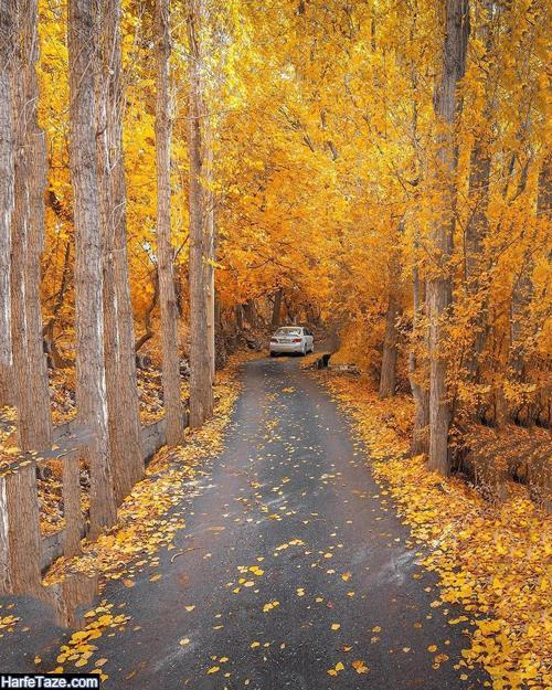 عکس طبیعت پاییزی برای تبریک فرارسیدن پاییز