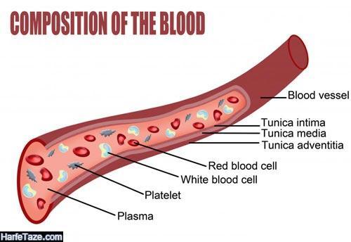 mpv در آزمایش خون چیست؟
