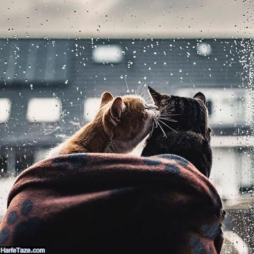 متن های عاشقانه باران