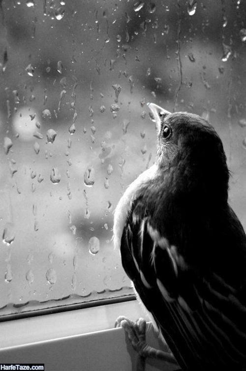 متن عاشقانه پاییز و بارون و هوای بارانی